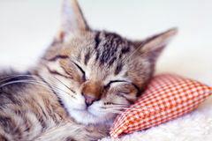 Sleeping Kitty with pillow Royalty Free Stock Photos