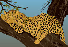 Sleeping leopard. A young and strong leopard sleeping at tree. Vector illustration Royalty Free Stock Photo