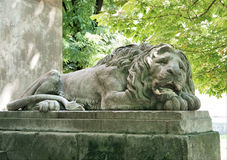 Sleeping lion sculpture. Lvov city. Ukraine Royalty Free Stock Image