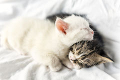 Sleeping little cats Stock Images