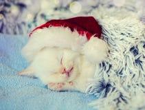 Sleeping little kitten wearing Santa Claus hat royalty free stock photo
