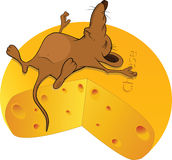 Sleeping little mouse. And the big piece of cheese Royalty Free Stock Photo