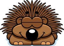 Sleeping Little Porcupine Stock Photography