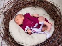 Sleeping lovely newborn boy royalty free stock photo
