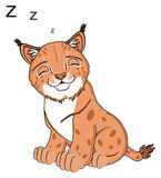 Sleeping lynx sit Stock Images