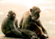 Sleeping moneys. Monkeys asleep in temple in Asia Royalty Free Stock Photography