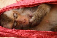 Sleeping monkey stock photos