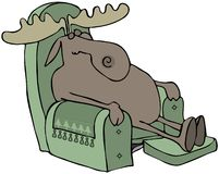Sleeping Moose In A Chair Stock Image