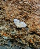 Moth on stone. Moth sleeping on a stone Royalty Free Stock Image