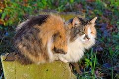 Sleeping multicolor cat Stock Image