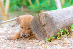 Sleeping Royalty Free Stock Photography