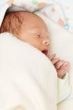 Sleeping newborn Stock Photography