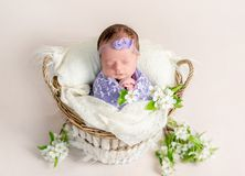 Sleeping newborn baby girl swaddled in a soft lilac blanket. Sitting in a basket with flowers around her Stock Photography