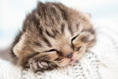 Sleeping newborn baby kitten Stock Image