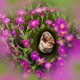 Pink flowers and sleeping baby Royalty Free Stock Image