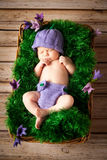 Sleeping newborn baby in a wicker basket Royalty Free Stock Images