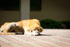 Sleeping old dog Stock Photos