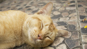 Sleeping orange cat Stock Photo