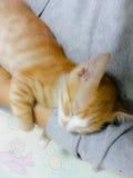 Sleeping  orphan  baby  cat Royalty Free Stock Photo