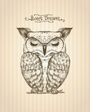 Sleeping owl hand drawn graphic illustration, front view Stock Photography