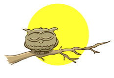 Sleeping owl sitting on a branch on a background of the full moo Royalty Free Stock Photography