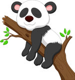 Sleeping panda cartoon Stock Photo