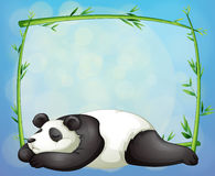 A sleeping panda and the empty frame made of bamboo Stock Images