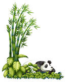 A sleeping panda Stock Image