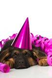 Sleeping party puppy Stock Photos