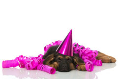 Sleeping party puppy Royalty Free Stock Photos