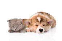 Sleeping Pembroke Welsh Corgi puppy and kitten. isolated on white Stock Image