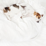 Sleeping pets on bed Royalty Free Stock Photos