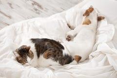 Sleeping pets on bed Stock Photo