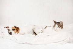 Sleeping pets on bed Stock Photos