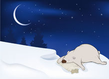 Sleeping polar bear Stock Photos