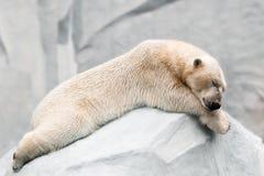 Sleeping polar bear. Polar bear sleeping on the white stone Royalty Free Stock Photos