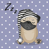 Sleeping Pug Dog Royalty Free Stock Photo