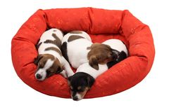 Sleeping puppies Stock Images