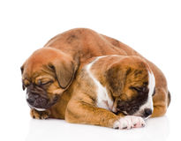 Sleeping puppies.  on white background.  Royalty Free Stock Photos