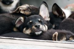 Sleeping puppy. Among the homeless brothers Stock Photo