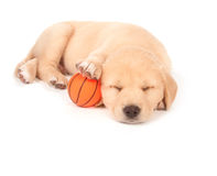 Sleeping puppy with basketball