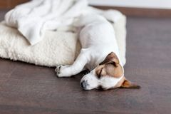 Sleeping puppy on dog bed Stock Photos