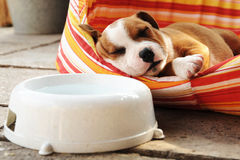 Sleeping puppy in the nest stock photography