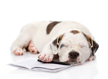 Sleeping puppy with pen and notebook. isolated on white backgrou Royalty Free Stock Photo