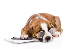 Sleeping puppy with pen and notebook. isolated on white Royalty Free Stock Image