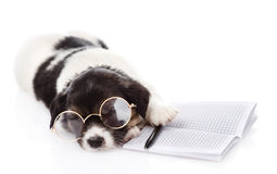 Sleeping puppy with pen and notebook.  on white Royalty Free Stock Photo