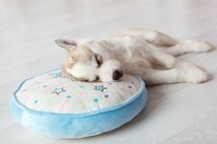 Sleeping puppy on round pillow Stock Images