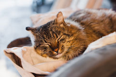 Sleeping quiet hairy cat Royalty Free Stock Photography