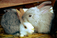 Sleeping rabbits Royalty Free Stock Photography