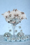 Sleeping Ragdoll kittens. 4 sleeping Ragdoll kittens in over-size champagne glass with mirror disco ball decorations royalty free stock photography